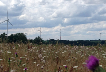 b_215_215_16777215_00_images_stories_energiewende_2020_200729-wind-p.jpg